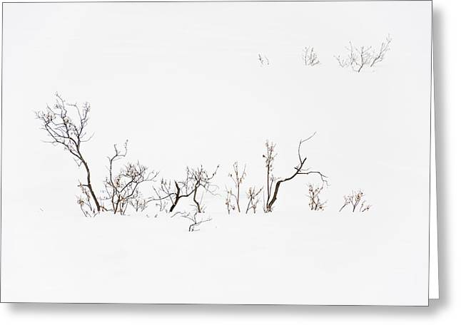 Twigs In Snow Greeting Card
