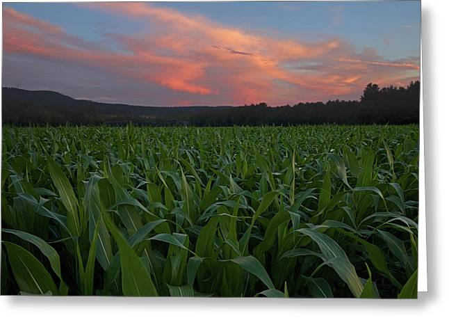 Twilight Cornfield Greeting Card by Jerry LoFaro