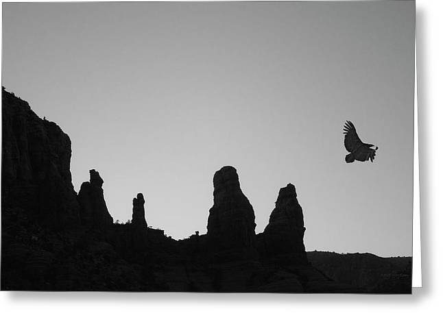 Twilight Flight Bw Greeting Card by David Gordon