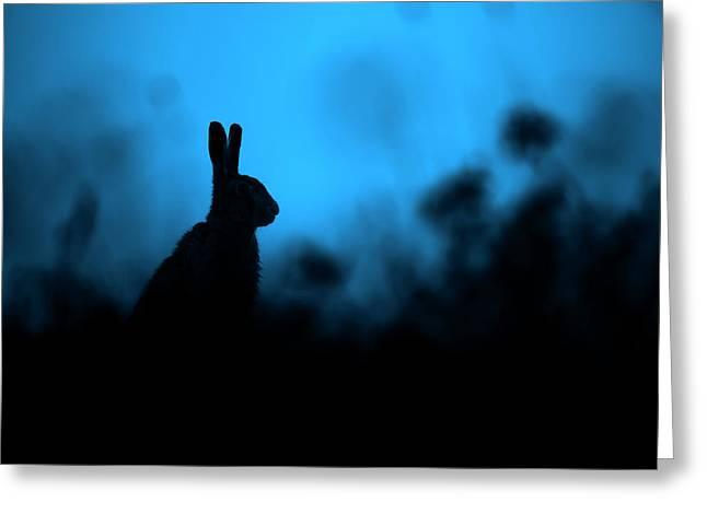 Twilight Hare Greeting Card