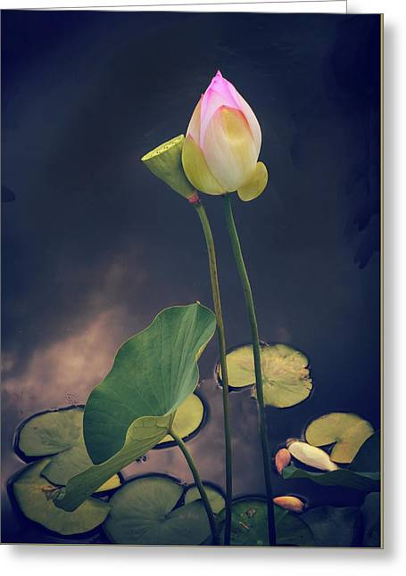 Twilight Lotus Pond Greeting Card by Jessica Jenney