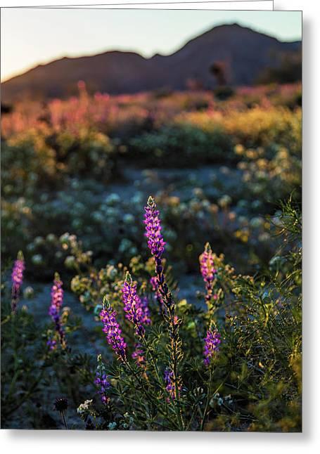 Twilight Lupine Greeting Card