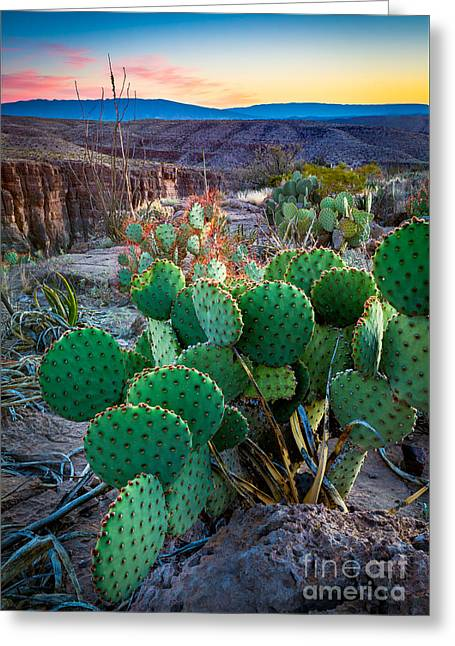 Twilight Prickly Pear Greeting Card by Inge Johnsson