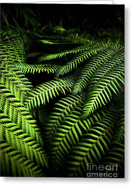 Twilight Rainforest Fern  Greeting Card