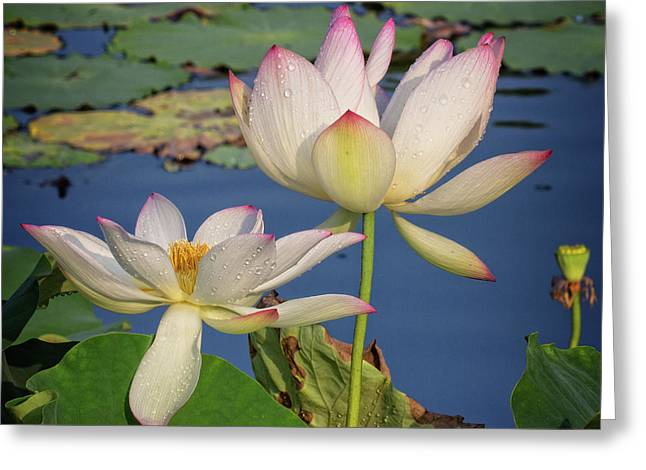 Greeting Card featuring the photograph Twin Blooms by Robert Pilkington