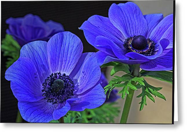 Greeting Card featuring the photograph Twin Blue by Robert Pilkington