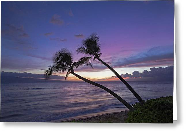 Twin Palms  Greeting Card by James Roemmling