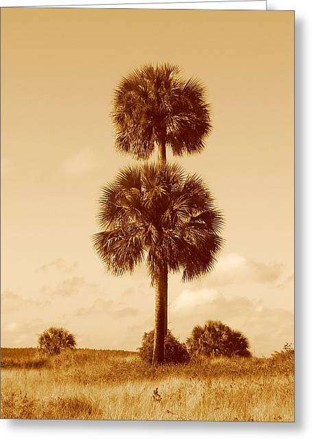 Greeting Card featuring the photograph Twin Palms by Peg Urban