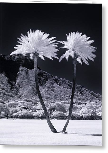 Twin Palms Greeting Card by Sean Davey