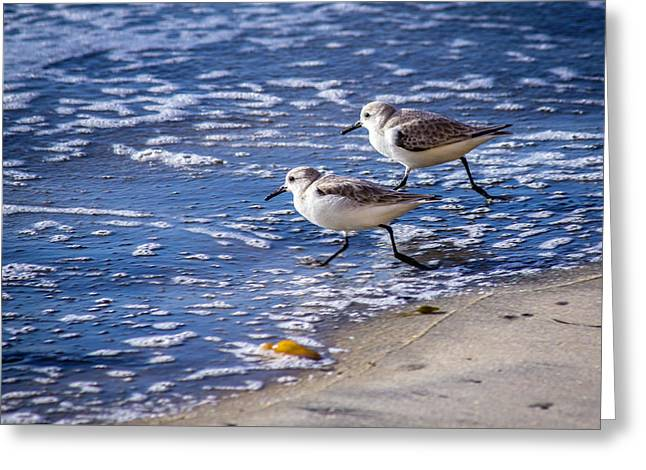 Twin Plovers Greeting Card
