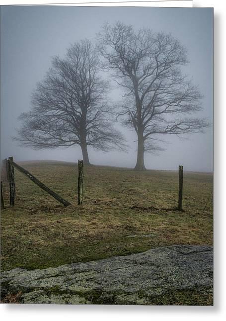 Twin Trees Late Fall Foggy Morning Greeting Card