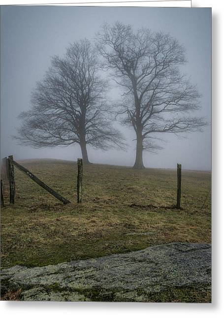 Twin Trees Late Fall Foggy Morning Greeting Card