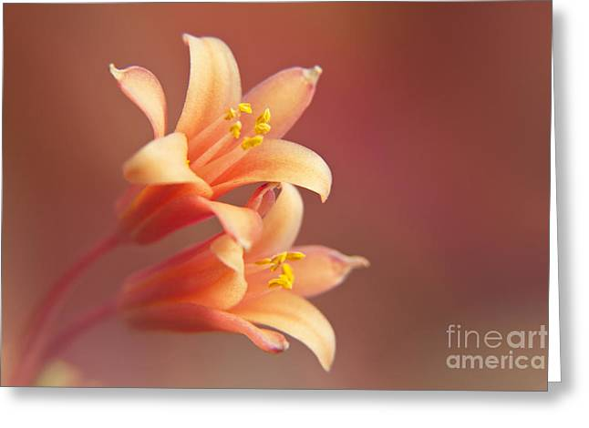 Twin Yucca Flowers Greeting Card