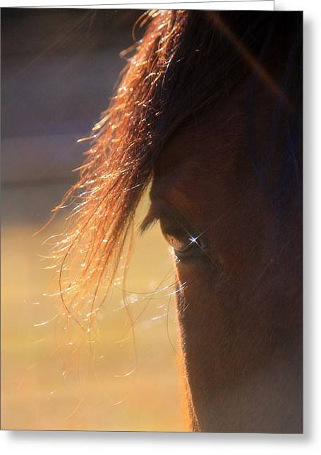 Twinkle Eyed Horse Greeting Card by Angie Wingerd