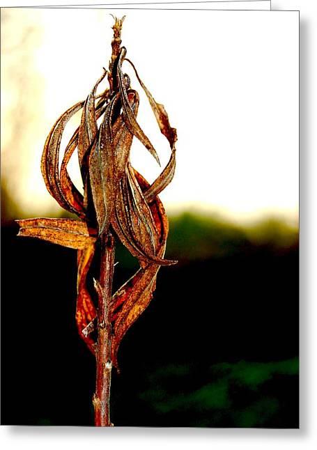Twist Plant Greeting Card by Lauren  Macko