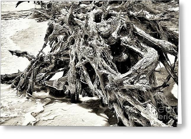Twisted Driftwood Greeting Card