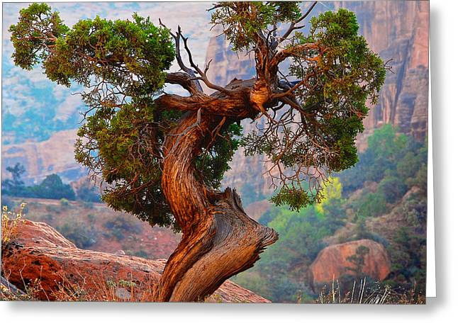 Twisted, Cedar Pine, Zion National Park, Utah Greeting Card