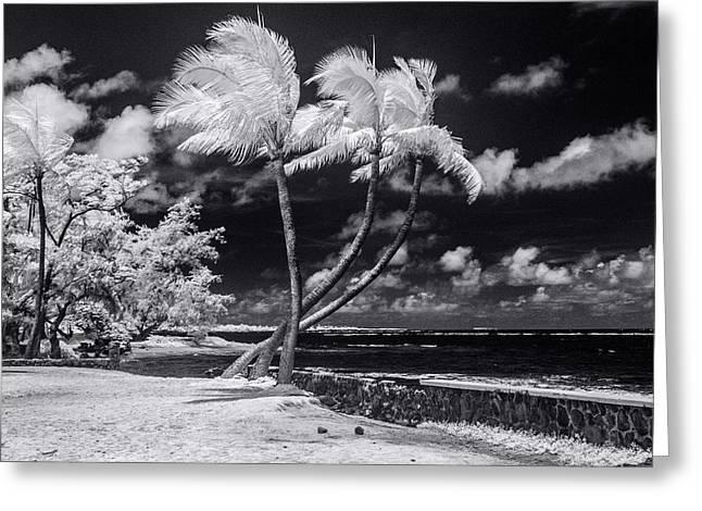 Twisted Palm Trio - Landscape Greeting Card by Sean Davey