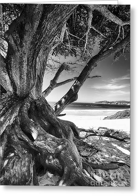Twisted Roots On The Beach Greeting Card by George Oze