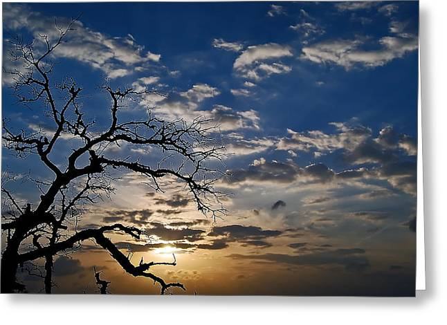 Twisted Sunset Greeting Card by Karl Manteuffel