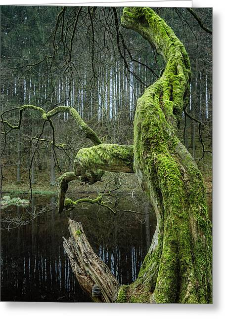 Twisted Tree Greeting Card by Alexander Kunz