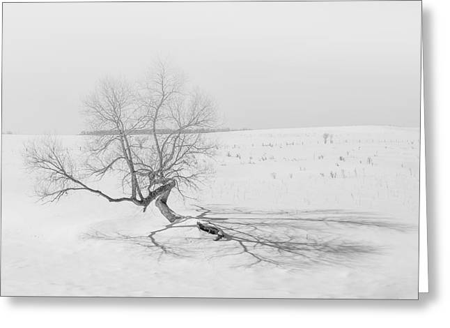 Greeting Card featuring the photograph Twisted Tree by Dan Traun