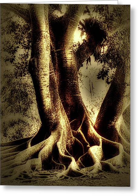 Twisted Trees Greeting Card by Tom Prendergast