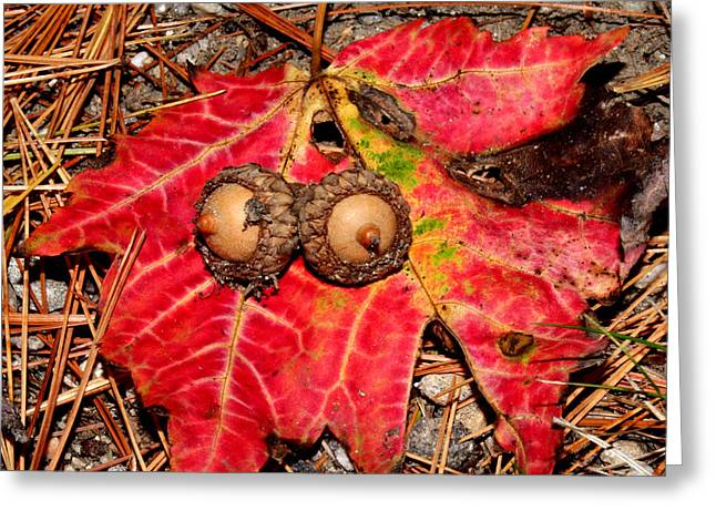 Two Acorns On Tatterd Maple Leaf Greeting Card by Robert Morin