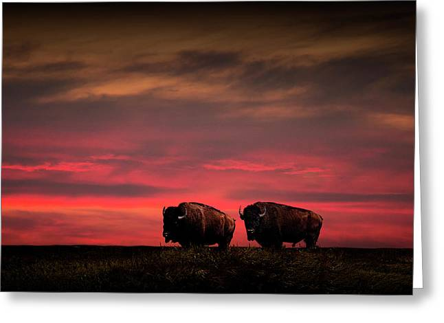 Two American Buffalo Bison At Sunset Greeting Card