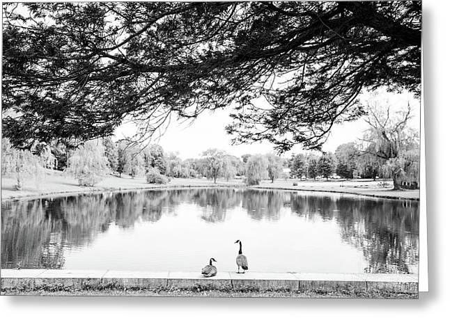 Greeting Card featuring the photograph Two At The Pond by Karol Livote