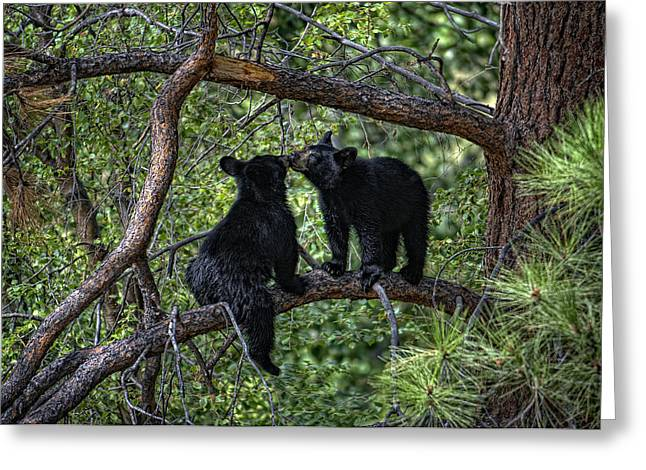 Two Bear Cubs Kissing Up A Tree Greeting Card