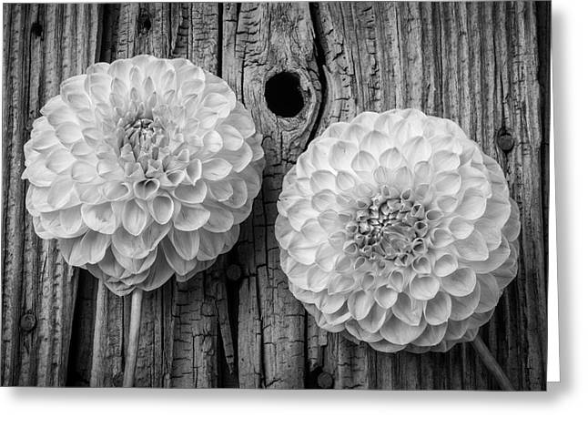 Two Black And Whte Dahlias Greeting Card by Garry Gay