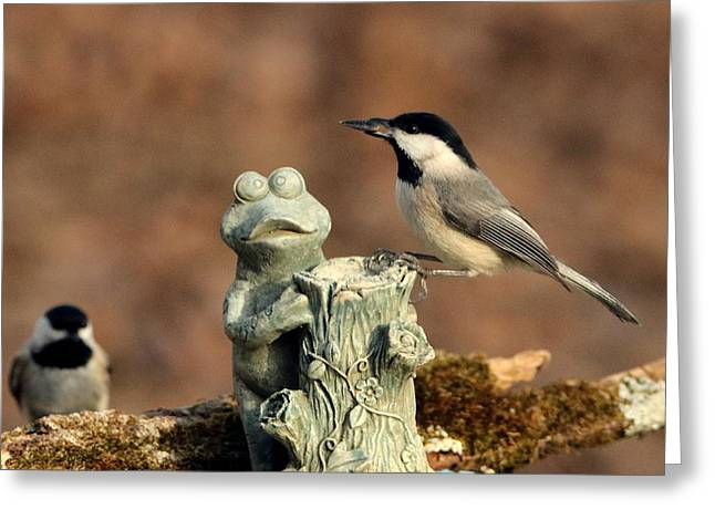 Two Black-capped Chickadees And Frog Greeting Card