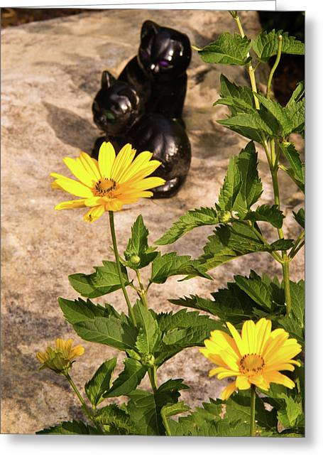 Two Black Cats And False Sunflowers Greeting Card by Douglas Barnett
