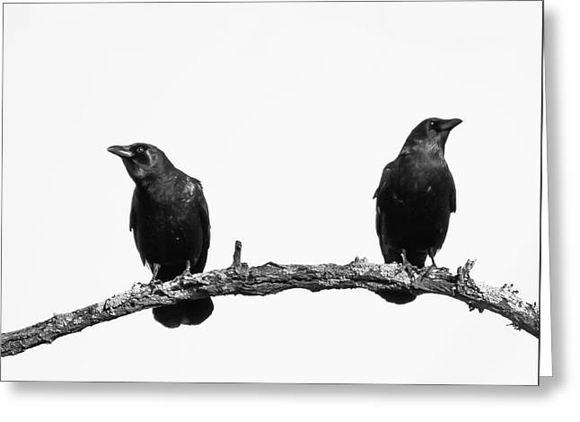 Two Black Crows One Branch White Square Greeting Card by Terry DeLuco
