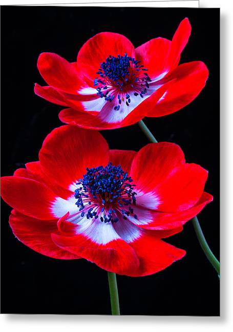 Two Bright Red Anemones Greeting Card by Garry Gay