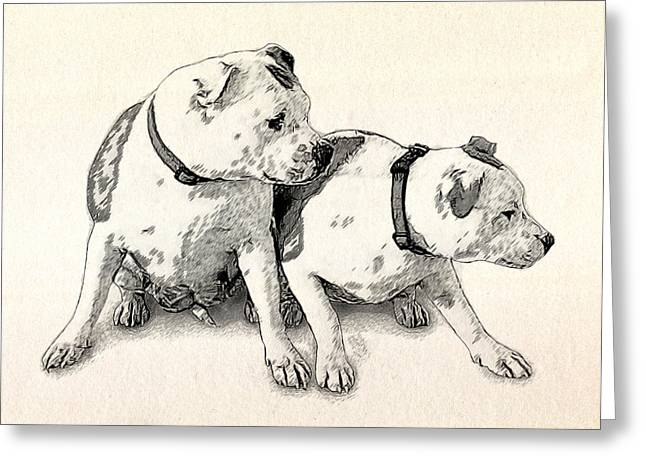 Two Bull Terriers Greeting Card by Michael Tompsett