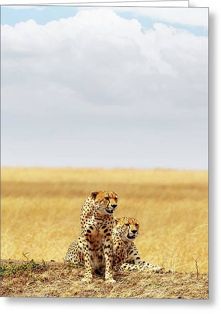Two Cheetahs In Africa - Vertical With Copy Space Greeting Card