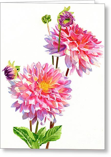 Two Colorful Dahlias On White Greeting Card