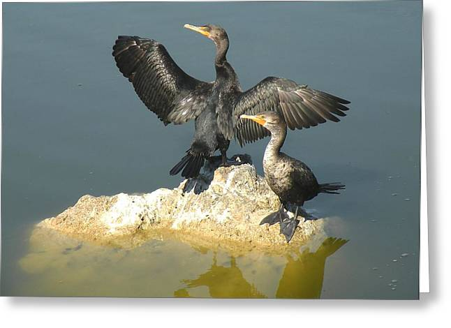 Two Cormorants Greeting Card by Rosalie Scanlon