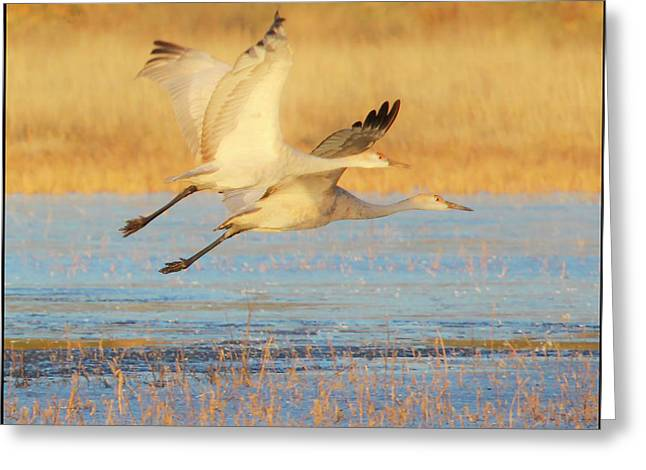 Two Cranes Cruising Greeting Card