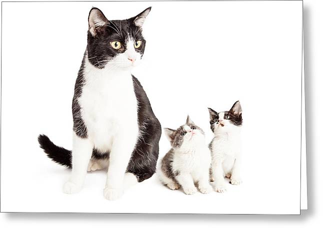 Two Cute Kittens Looking Up At Mom Cat Greeting Card