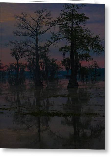 Two Cypress At Dawn Greeting Card