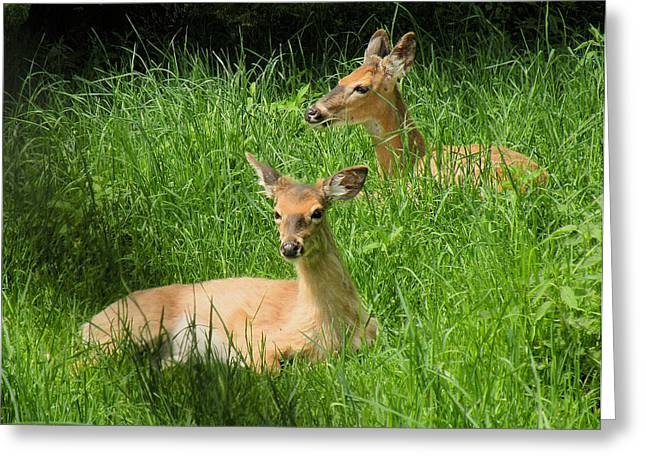 Two Deer In Tall Grass Greeting Card by Rosalie Scanlon