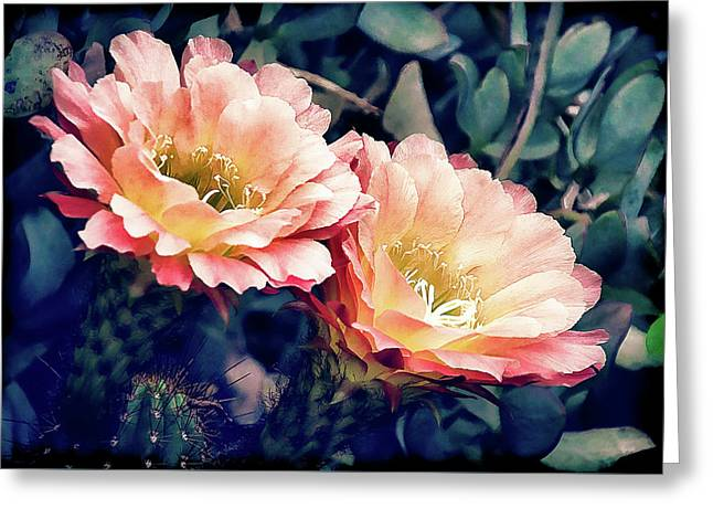 Two Desert Blooms Apricot Glow Greeting Card