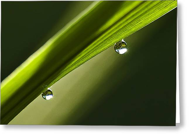 Two Dew Drops On A Blade Of Grass Greeting Card by Michael Whitaker