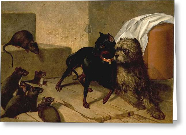 Two Dogs Cowering Before Rats Greeting Card