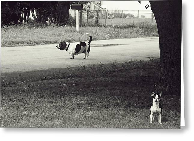 Two Hounds Greeting Cards - Two Dogs Greeting Card by Toni Hopper