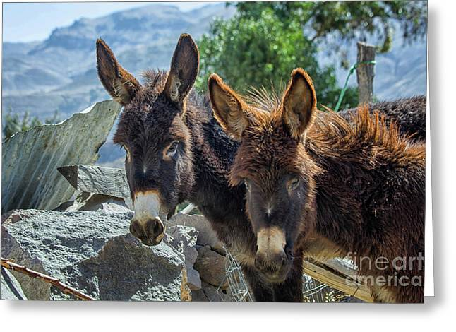 Two Donkeys Greeting Card by Patricia Hofmeester