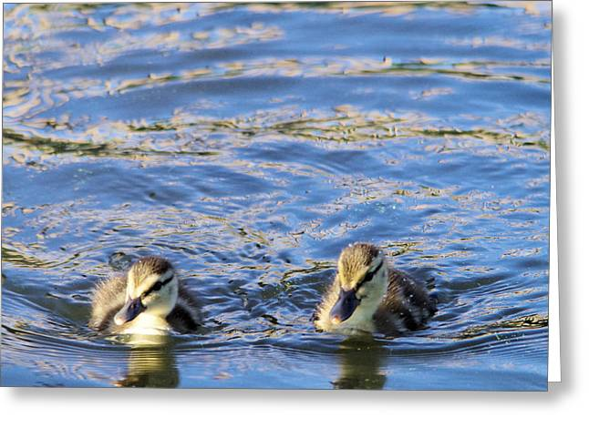 Two Ducklings Greeting Card